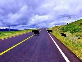 甘孜州春运期间交通管制路段及绕行方案+主要国省干道及旅游线路安全隐患提示