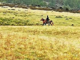 高原骑马是怎样的感受?来麻同拉域吧,让你在云巅飞驰如风!
